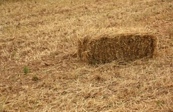 Hay Bale in Field. Hay Stack, Dry Straw in Summer or Autumn in Rural Area, Countryside. Dry Land, Season, Climate, Agriculture, Harvest, Idyllic Farming Image.