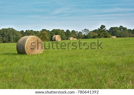 Hay bale in Texas field with blue sky in fall