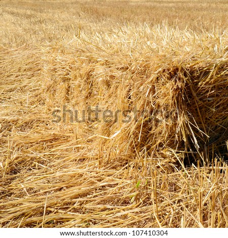 Hay bale in the field