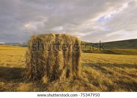 hay bale in the rising sun. Autumn pastures are mowed and the hay is gathered into bales to feed livestock through the austere months of winter. South Africa.