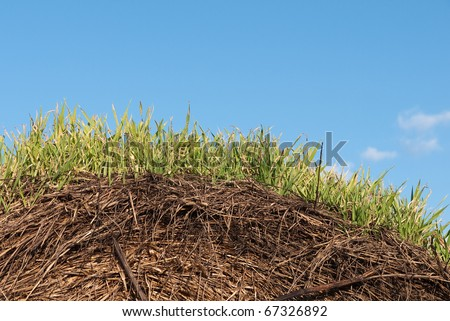 Hay bale sprouting - for curved grass / sky background