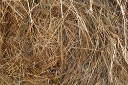 Hay bales are stacked in large stacks. Harvesting in agriculture. Yellow dry hay straw backdrop texture. Dry cereal plants, farm rural agricultural.