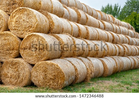 Hay bales. Hay bales are stacked. Harvesting in agriculture. #1472346488