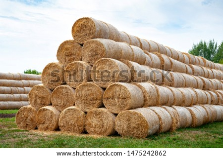 Hay bales. Hay bales are stacked on the field in large stacks. Harvesting in agriculture. #1475242862