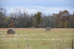 Hay bales in a farm field