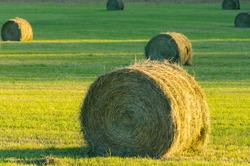 Hay bales in a field at sunset in northern Michigan