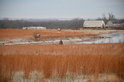 Hay bales in a frosty hay field