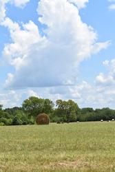 Hay bales in a hay field