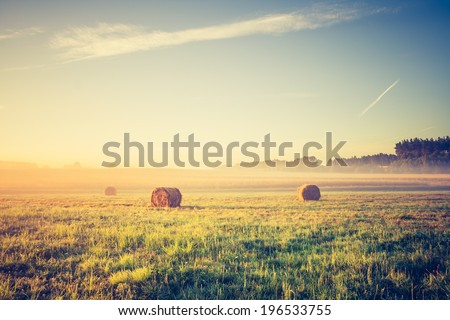 hay bales on foggy morning on...