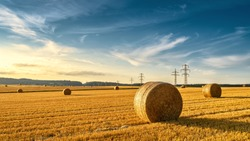 Hay bales on golden agriculture field. Sunny landscape with round bales in summer. Rural scenery of straw stacks at sunset. Panorama of yellow wheat haystacks in countryside. Farm and pasture concept