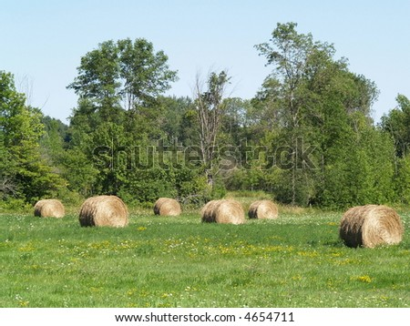 hay bales on rural landscape