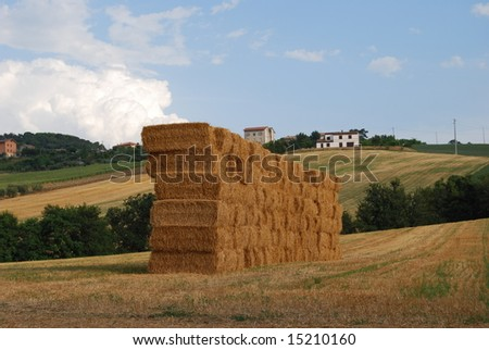 Hay bales stacked in a field