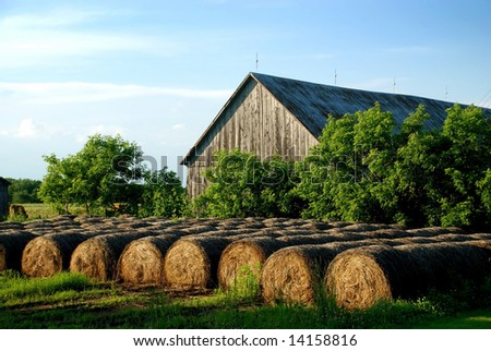 Hay Bales stored outdoor at front of old wooden barn