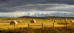 Hay field and a row of wind turbines