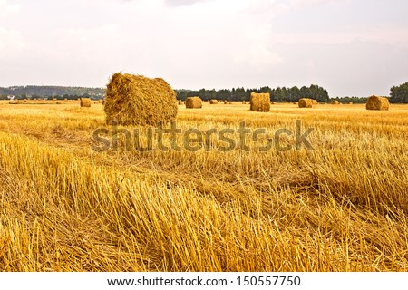 Hay in a field