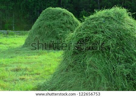 Hay in stacks in a summer rural landscape #122656753
