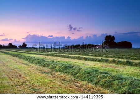 hay on field at pink summer sunrise, Groningen, Netherlands #144119395