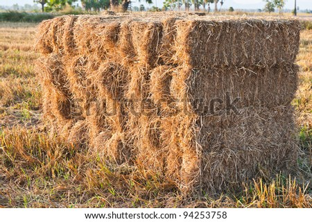 hay pile at the country of thailand