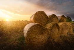 Hay roll bales on countryside field
