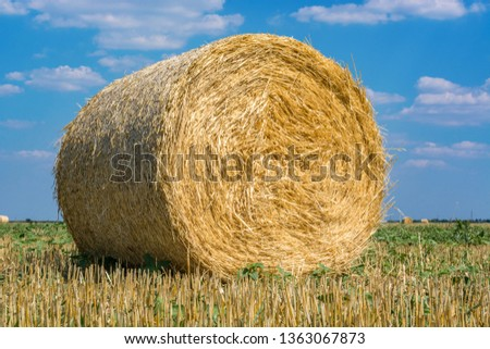 Hay roll closeup on the field, after harvesting wheat or rye against the blue sky with clouds, summer day. Space for text. Copy space. #1363067873