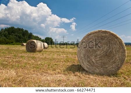 Hay rolls on a field - stock photo