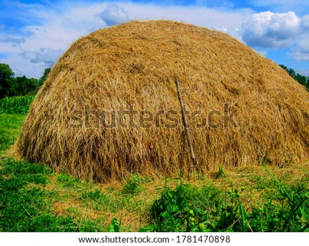 Hay stack or haystack & hayforks for horse feed on blue sky background. Mowed dry grass (hay) in stack or haystack on farm field. Hay pile stack farmer mowed for animal feeding. Big haystack harvest Stock photo ©