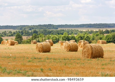 hay stacks in autumn field
