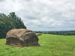 Haybails and haystacks in a field for sheep and livestock in preparation for winter