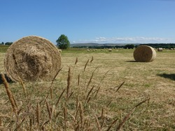 Haybails in a field on a sunny summers day.