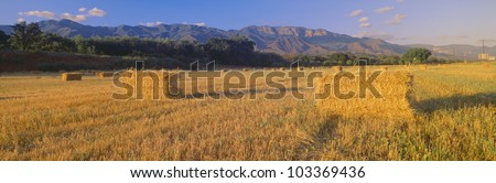 Hayfields in Upper Ojai Valley, California
