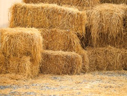 Haystack, a bale of hay group. Agriculture farm and farming symbol of harvest time with dry grass (hay),  hay pile of dried grass hay straw.