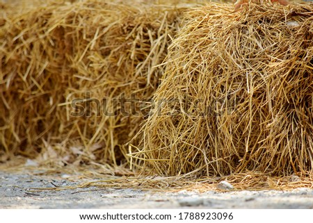 Haystack, hay straw, Bale of hay group, dry grass (hay), dry straw on the road.  Сток-фото ©