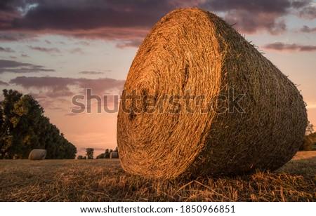 Haystack on farm field in morning. Haystack. Haystack farm field. Haystack view Stock photo ©