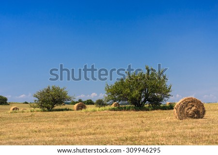 Haystacks after harvesting in Yamskaya Steppe protected area, Belogorie, southern Russia
