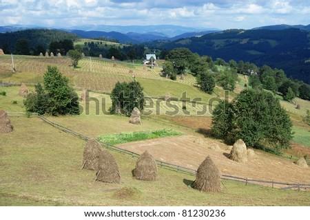 Haystacks and fields, Apaseni Mountains, Romania