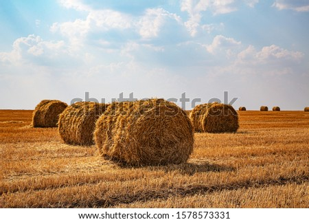 Haystacks harvested on a field in late summer Stock photo ©