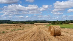 Haystacks in wheat fields. Ile-de_-France region