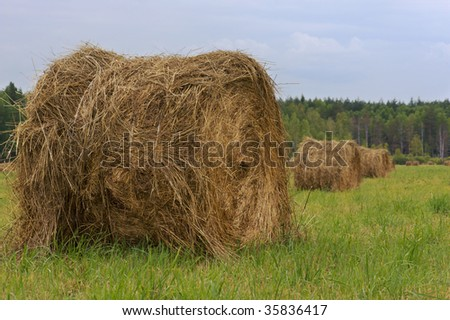 Haystacks located on a summer pasture