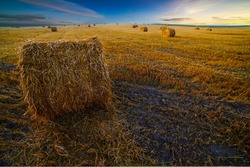 Haystacks on the field, mown wheat