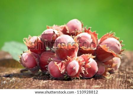 hazelnut - stock photo
