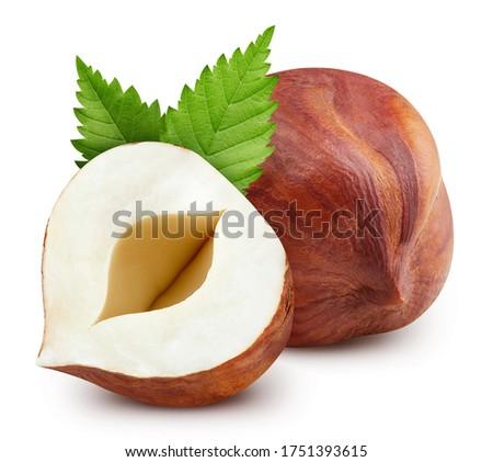 Hazelnut nut. Hazelnut isolated on white background. Hazelnut clipping path.