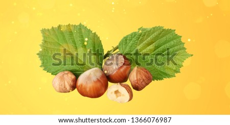 Hazelnuts Composition - Isolated