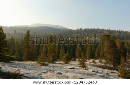 Hazy day in Sequoia National Forest