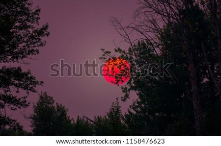 Hazy Sun Behind The Trees