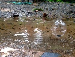 HD Flower frog Raindrop Cutecat
