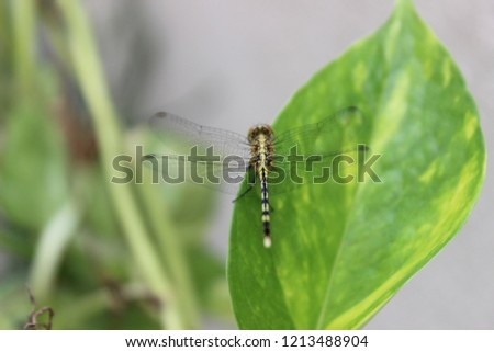HD PICS OF INSECTS