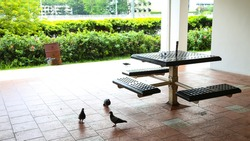 HDB void deck in Toa Payoh, Singapore. Public housing sitting area with litters and pigeons.