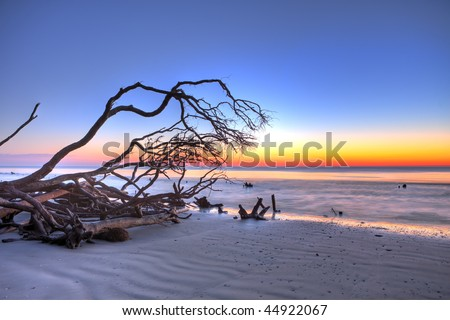 hdr image of beach and driftwood at twilight
