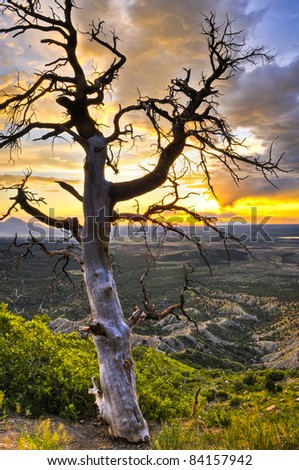 HDR image of dead tree against dramatic stormy sky taken in Mesa Verde National Park in Colorado
