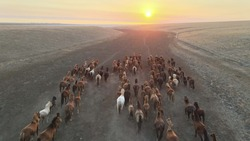 Hdr Landscape view of Wild Horses Running. Herd of horses running on steppes to lake